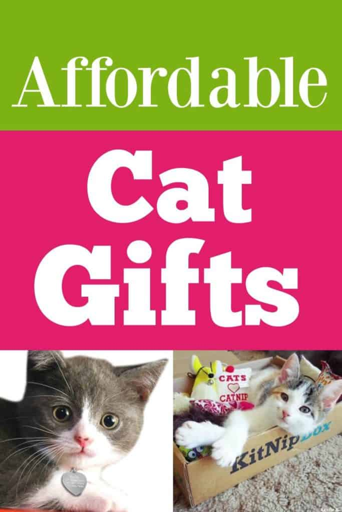 Looking for affordable gifts for your cat? Check out these affordable cat gifts.