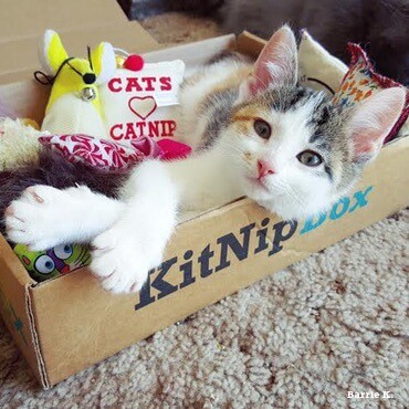 Looking for a cat gift? How about a Kitnipbox? Check it out.